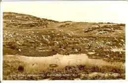 NORVEGE CARTE PHOTO GULL POND ROCKCLIFFE KIRKCUDBRIGHTSHIRE - Noruega
