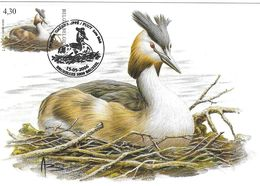BUZIN Oiseau Grèbe Huppée Cachet BRUXELLES 13/05/2006 Timbre Yvert 3518 Carte Signée Buzin - Tarjetas – Máxima