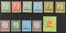 "1908-14  Complete Set Overprinted ""SPECIMEN"", SG 35/47s, Plus 3d White Back, Fine Mint. (11 Stamps) For More Images, Ple - Montserrat"
