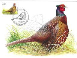 BUZIN Oiseau Faisan De Colchide Cachet BRUXELLES 1er Jour 16/06/2010 Timbre Yvert 4027 Carte Signée Buzin - Tarjetas – Máxima
