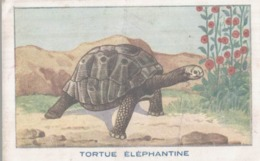 CHROMO SIROP DE DESCHIENS ANEMIE  LES REPTILES  LA TORTUE ELEPHANTINE - Chromos