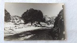 Argentina Neige Dans La Pampa 1947 Carte Postale Postcard #14 - Argentine
