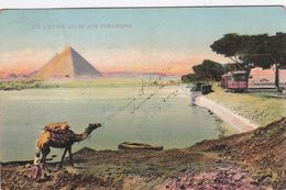 LE CAIRE / ALLEE AUX PYRAMIDES / CIRC 1912 - Cairo