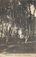 PORQUEROLLES-sous-bois De La Route Des Mèdes - Porquerolles