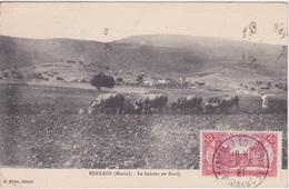 MAROC - BERKANE - LE LABOUR AU BRODJ - BOEUFS 1921 - Agriculture