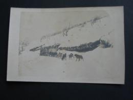 Carte Postale à Identifier - Expédition Militaire Avec Chiens De Traineaux - WW1 ? - Oorlog 1914-18