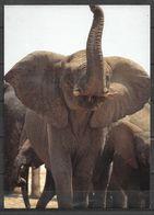 KENYA VIEW CARD ,POSTCARD AFRICAN ELEPHANT - Kenia