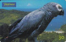 TARJETA DE BRASIL DE UN  LORO  (PARROT) - Parrots