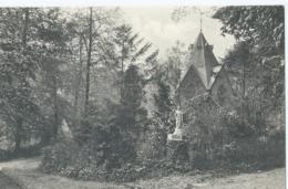 Tieghem - Gezicht In Het Bosch - Vue Dans Le Bois - Anzegem
