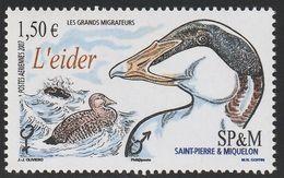 2007 St. Pierre And Miquelon Migratory Birds: Eider Stamp (** / MNH / UMM) - Ducks