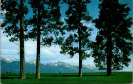 Montana Yellow Pine And Mission Range - Etats-Unis