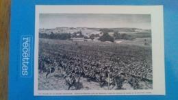 AFFICHE - PHOTOS SUR PAPIER -  UN VILLAGE DE LA GRANDE CHAMPAGNE - MAINE AU BRETON PRES DE SEGONZAC - Riproduzioni