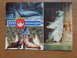 Dierenpark - Zoo / Zoo Van Antwerpen --> Beschreven - Animals