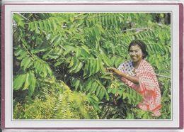 COMORES - Mayotte  Cueillette Des Fleurs - Comores
