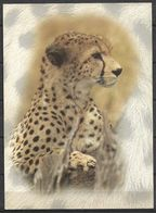 KENYA POSTCARD , VIEW CARD CHEETHA , LEOPARD - Kenia