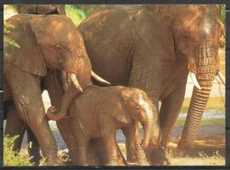 KENYA POSTCARD , VIEW CARD ELEPHANTS - Kenia