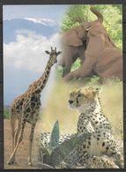 KENYA POSTCARD , VIEW CARD ELEPHANT, LEOPARD , GIRAFFE - Kenia