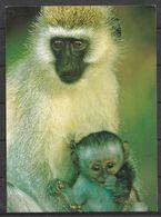 KENYA POSTCARD , VIEW CARD MONKEY - Kenia