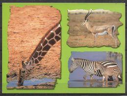 KENYA POSTCARD , VIEW CARD GIRAFFE , DEER , ZEBRA - Kenia