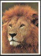 KENYA POSTCARD , VIEW CARD   LION - Kenia