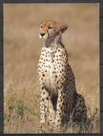 KENYA POSTCARD , VIEW CARD LEOPARD - Kenia
