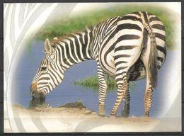 KENYA POSTCARD , VIEW CARD ZEBRA - Kenia