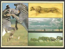 KENYA POSTCARD , VIEW CARD DIFFERENT ANIMALS IN VIEW - Kenia