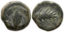 BAICIPO. Semis. 50 A.C. Vejer De La Frontera (Cádiz). (Abh-183). A/ Racimo De U - Monnaies Antiques