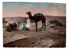 Afrique Chameau Dans Le Désert Du Sahara ? La Halte - Postales