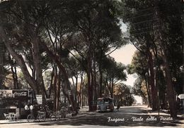 "8716 "" FREGENE-VIALE DELLA PINETA "" AUTOBUS -PUBBLICITA' COCA COLA-CARTOLINA POSTALE ORIGINALE SPEDITA 1955 - Autres Villes"