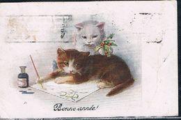 2 Chats  - Cats  -kleine Katzen-  Poesjes Schrijven   -gatto - Gatti