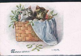 2 Chats  - Cats  -kleine Katzen-  Poesjes In Mand  -gatto - Gatti