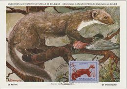 Bulgarie Carte Maximum 1963 Fouine 1179 - Briefe U. Dokumente