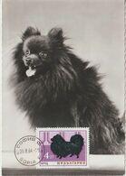 Bulgarie Carte Maximum Chien 1964 Loulou 1265 - Briefe U. Dokumente