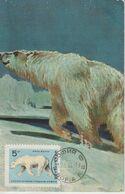 Bulgarie Carte Maximum 1966 Ours Blanc 1420 - Briefe U. Dokumente