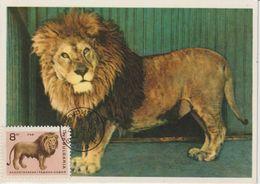 Bulgarie Carte Maximum 1966 Lion 1421 - Briefe U. Dokumente