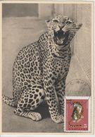 Bulgarie Carte Maximum 1968 Léopard 1605 - Briefe U. Dokumente