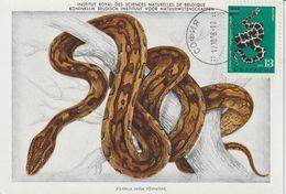 Bulgarie Carte Maximum 1968 Python 1606 - Briefe U. Dokumente