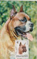 Bulgarie Carte Maximum Chien 1970 Boxer 1802 - Briefe U. Dokumente