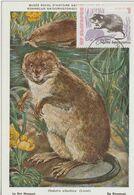 Bulgarie Carte Maximum 1973 Rat Musqué 2008 - Briefe U. Dokumente