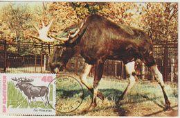 Bulgarie Carte Maximum 1973 élan 2013 - Briefe U. Dokumente