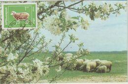 Bulgarie Carte Maximum 1974 Mouton 2071 - Briefe U. Dokumente
