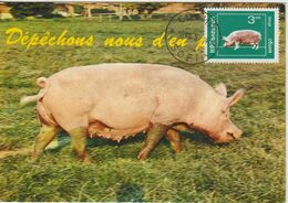 Bulgarie Carte Maximum 1974 Cochon 2073 - Briefe U. Dokumente
