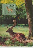 Bulgarie Carte Maximum 1981 Daim 2636 - Briefe U. Dokumente