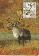 Bulgarie Carte Maximum 1987 Caribou 3100 - Briefe U. Dokumente