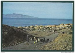 FOGO ISLAND - S. FILIPE - CHEVRES CHEVRE GOAD GOATS - CABO VERDE CAPE - Cape Verde