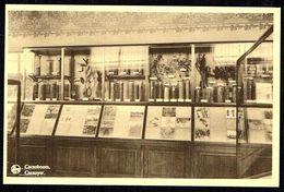 Bruxelles / Brussel - Musée Du Congo Belge - Cacaoyer - Non Circulé - Not Circulated - Nicht Gelaufen - Musei