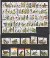 Très Bel Ensemble Oiseaux De Buzin Oblitérés 92 Timbres Tous Différents Avec Les Grosses Valeurs - 1985-.. Vogels (Buzin)