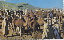 Maroc - Marrakech - Marché Aux Dromadaires - 1965 - Marrakesh