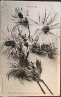 Cpa De 1907, éd  Astoin, 04 - LARCHE - Reine Des Alpes - Fleur Se Trouvant Dans Le Vallon Du Lauzannier - Andere Gemeenten